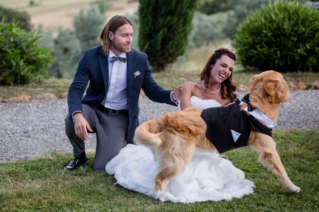 golden retriever al matrimonio